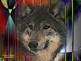 wolfinabstract